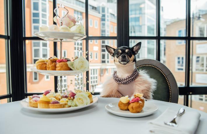 Otel eleştirmeni köpek aranıyor