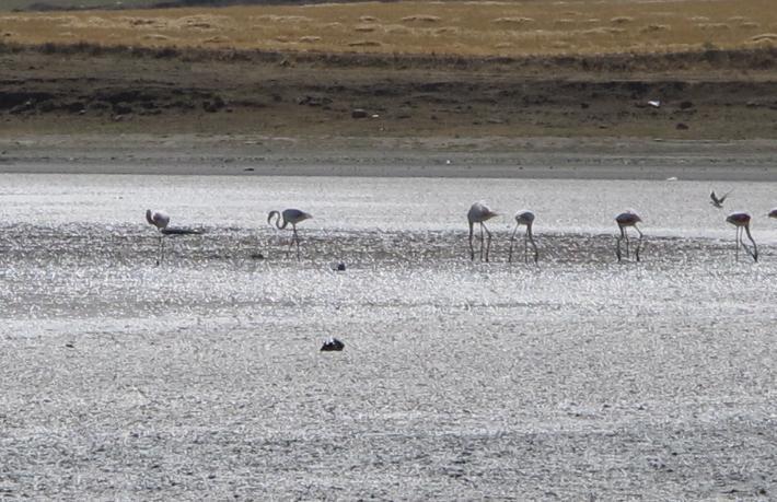 Ankara'dan Tuz Gölü'ne Foto Safari