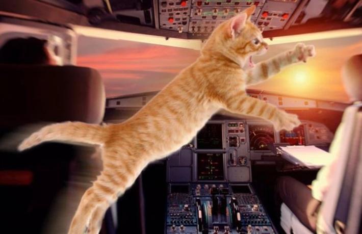 Pilota kedi saldırdı uçak acil iniş yaptı