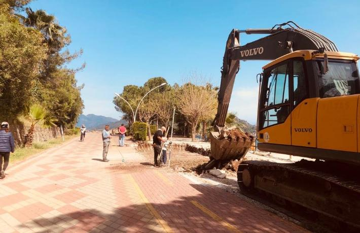 Bakanlığın plaj için ağaç kesmesi, çevrecileri ayaklandırdı