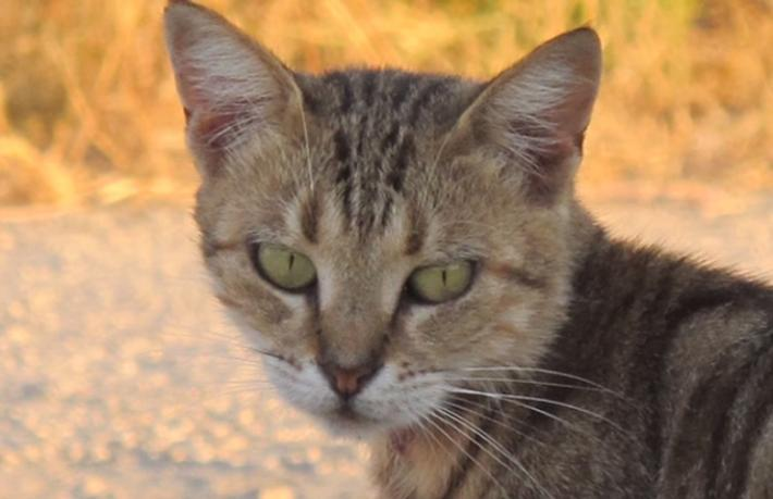 Tatilin Tatlı Belaları; Sokak Hayvanları